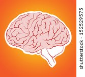 vector illustration of a brain | Shutterstock .eps vector #152529575