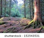 Deep In The Norwegian Woods At...