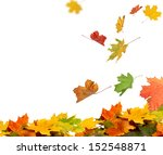 isolated autumn leaves | Shutterstock . vector #152548871
