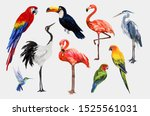 beautiful tropical vintage... | Shutterstock .eps vector #1525561031