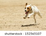 Stock photo some dogs likes to run free 152565107