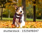 Autumn Dog  A Cute Puppy With ...