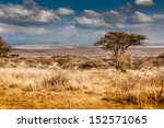 Hot  Dry  Parched Serengeti...