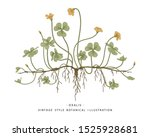 sketch of medicinal herbs set.... | Shutterstock .eps vector #1525928681
