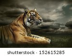 Tiger Looking And Sitting Unde...