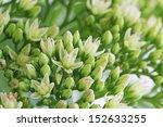 sedum spectabile  | Shutterstock . vector #152633255
