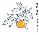 mandarin  branch with leaves ... | Shutterstock .eps vector #1526417267