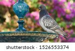 Rock Pigeons Columba livia Perched on Iron Fountain Colored and Blurred Background Cadiz Spain