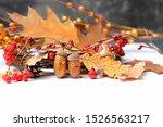 Autumn Funny Acorns. Acorns...