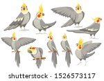 Set Of Adult Parrot Of Normal...