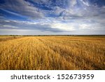 Agriculture. Stubble Field...