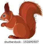 Squirrel Drawn In Vector Art