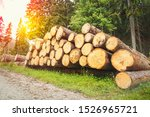 trunks of trees with denoted... | Shutterstock . vector #1526965721