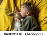 Stock photo child boy playing with bunny rabbit kid holding funny little pet 1527000044