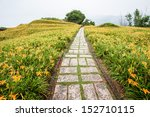 Path Through Day Lily Garden