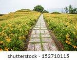 Path Through Day Lily Garden