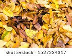 Old Fallen Leaves Of Trees That ...