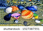 Seashells on sand beach view. Seashell group on beach. Seashells top view. Seashells colorful set