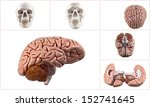 collection of brain and skull... | Shutterstock . vector #152741645