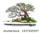 Chinese Bonsai Tree Created By...