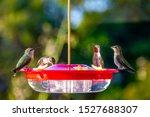 Many Hummingbirds On A...