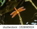 The Flame Skimmer Or...