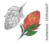 king tropical protea. vector... | Shutterstock .eps vector #1528162637