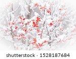 Winter Wonderland White Snow On ...
