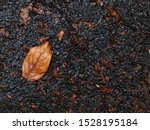 Stock photo yellow brown tropical tree lifeless leave falling in garden after a rainy night selective focus for 1528195184