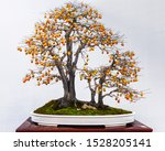 Chinese Bonsai Trees With...