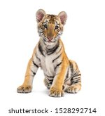 Two Months Old Tiger Cub...