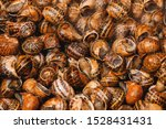 Stock photo traditional mediterranean snail recipe top view and close up with selectiv focus tasty and 1528431431