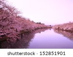 Moat And Cherry Blossoms Of...