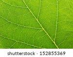 Fresh Green Leaf Texture Macro...