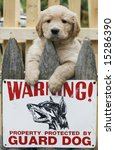 humorous picture with golden retriever puppy above guard dog sign - stock photo