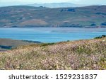 View Of Tomales Bay From Hill...