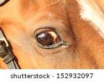 Closeup Of A Big Horse Head...