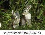 Stock photo hare and hare sitting in the grass 1530036761