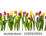 Different Tulips On A White...