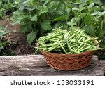 Fresh Green Beans Picked And...