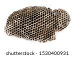 Wasp Hive  Nest Isolated On...