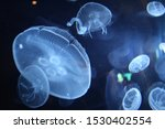 Jellyfish In Water Fractal...