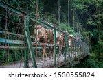 Sachen  Sikkim  India  ...