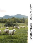 Small photo of Sheep on Mountainside in Adirondack Mountains, Upstate New York, sheep and lamb, farm raised, goats milk, rural farm with view of high peak region, grazing sheep eating grass, hand spun wool farmstead