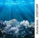 Tranquil Underwater Scene With...