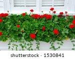 Red Geraniums On Windowsill