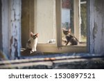 Stock photo kittens in the window of an abandoned house abandoned kittens in old house 1530897521