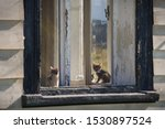 Stock photo kittens in the window of an abandoned house abandoned kittens in old house 1530897524