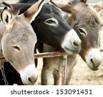 Donkeys on a farm