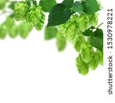 Small photo of Green hop cones - ingredient in the beer production. Fresh green hop branch with Hop cones and leaf on white background.Hops vine with cones and leaves border on white background with copy space.